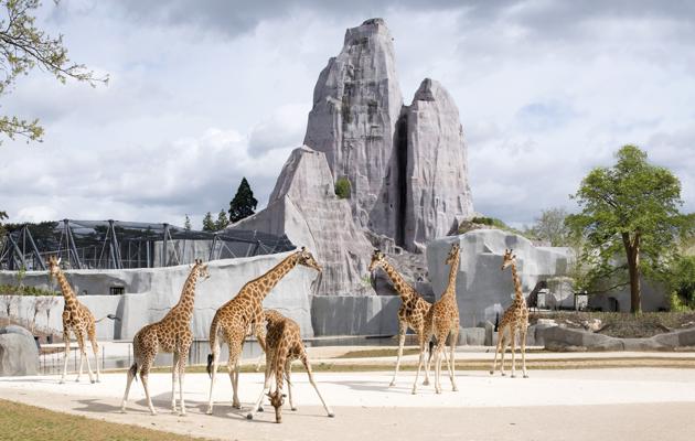 The Paris zoo