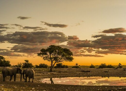Sunset with elephants on an African plain