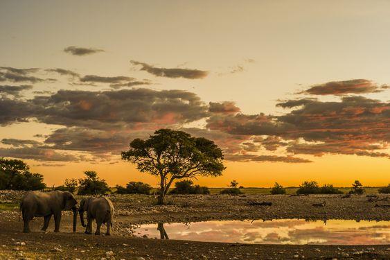 Sunset with elephants on an African plain